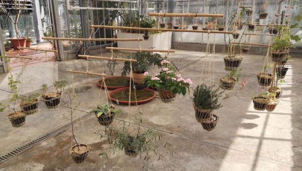 Specimen de plantes suspendus dans pots en osier